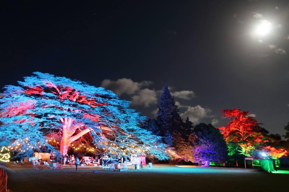 illuminated-tree-festoon-moon
