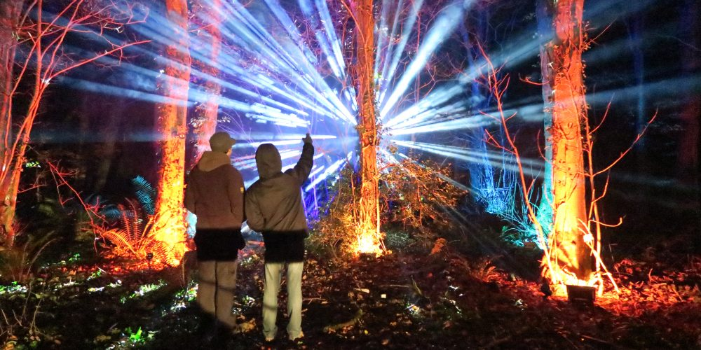 Woodland-colourful-tree-lighting-mirror-ball-beams