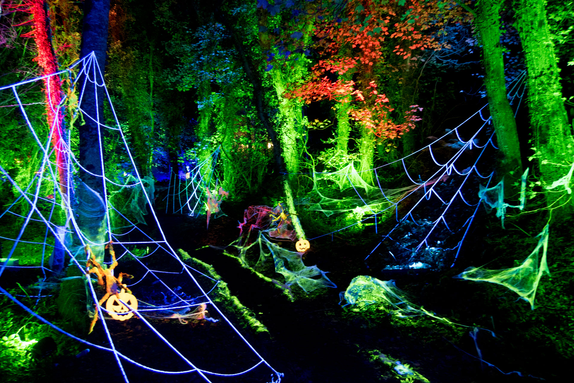 Halloween lighting event in an enchanted forest in North Wales, with giant UV reactive spider webs, glowing spiders and pumpkins. Uplit trees, illuminated in green and blue by waterproof LED lighting
