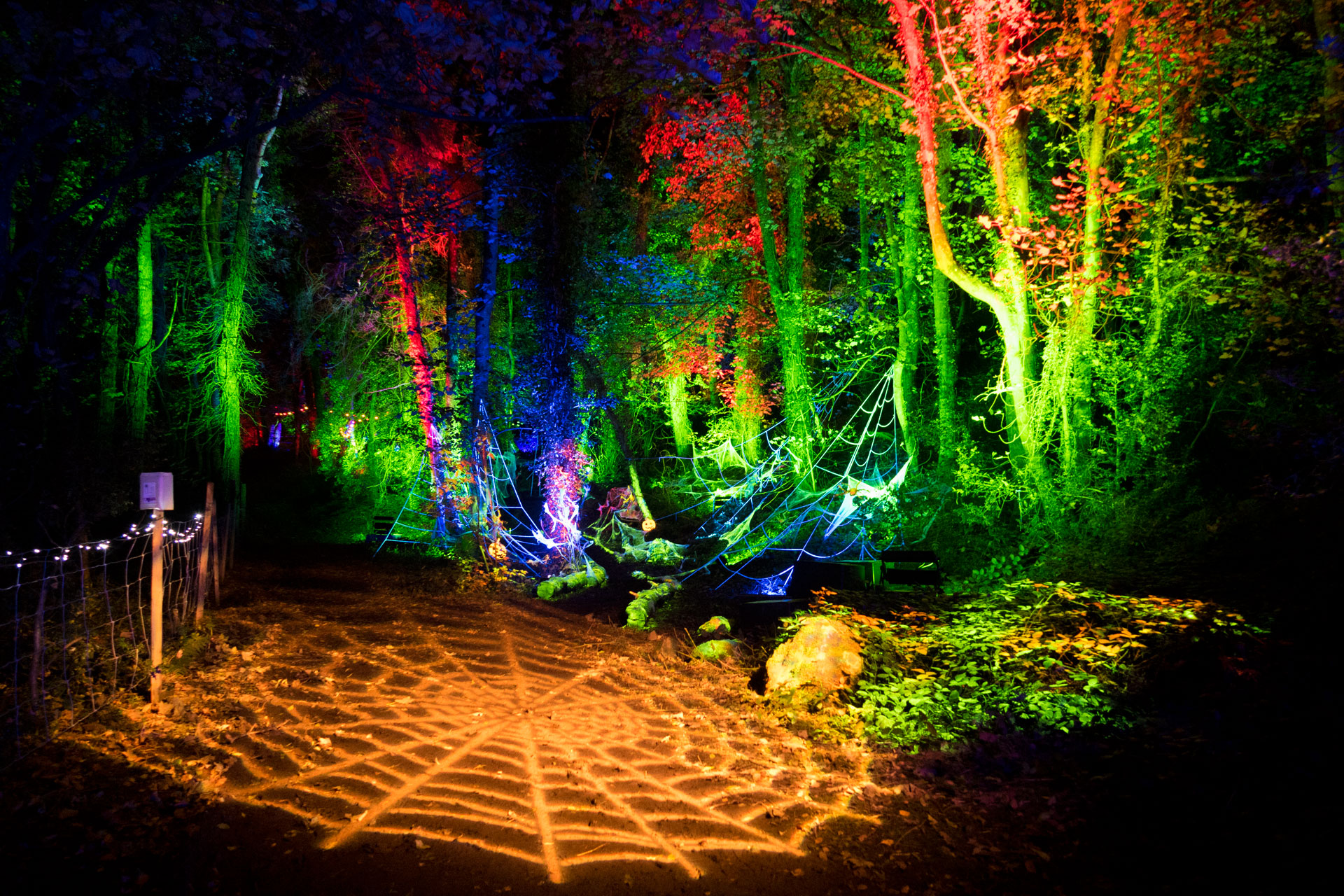 Giant spider web gobo projection, in an enchanted forest at an outdoor Halloween lighting event in North Wales. With up-lit trees, illuminated in green, blue and red, using weatherproof LED battens and flood lights.