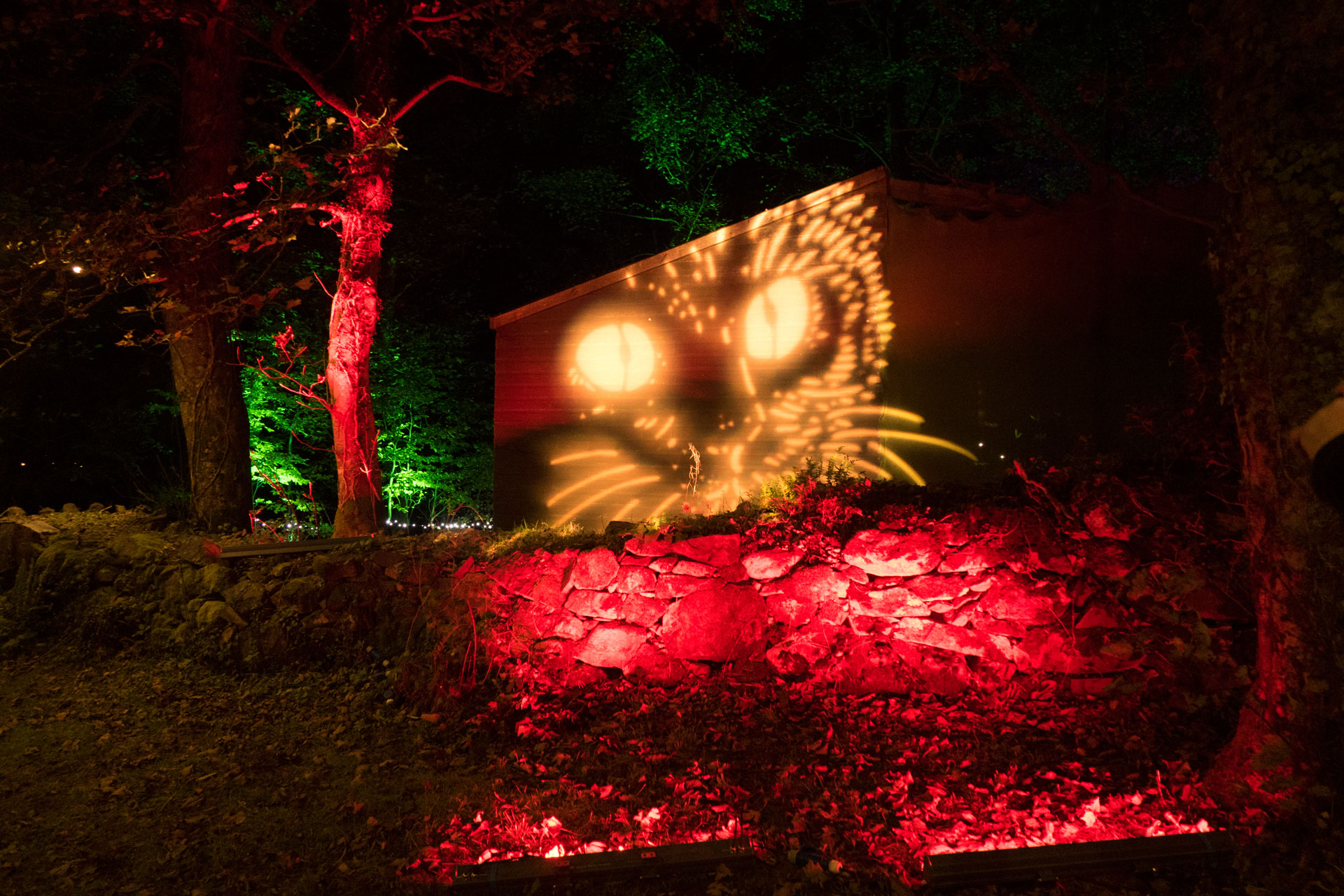 Halloween outdoor lighting event, in an enchanted illuminated forest in North Wales. Cat face gobo projection and coloured LED tree and wall lighting, in red and green, using waterproof LED battens and flood lights.