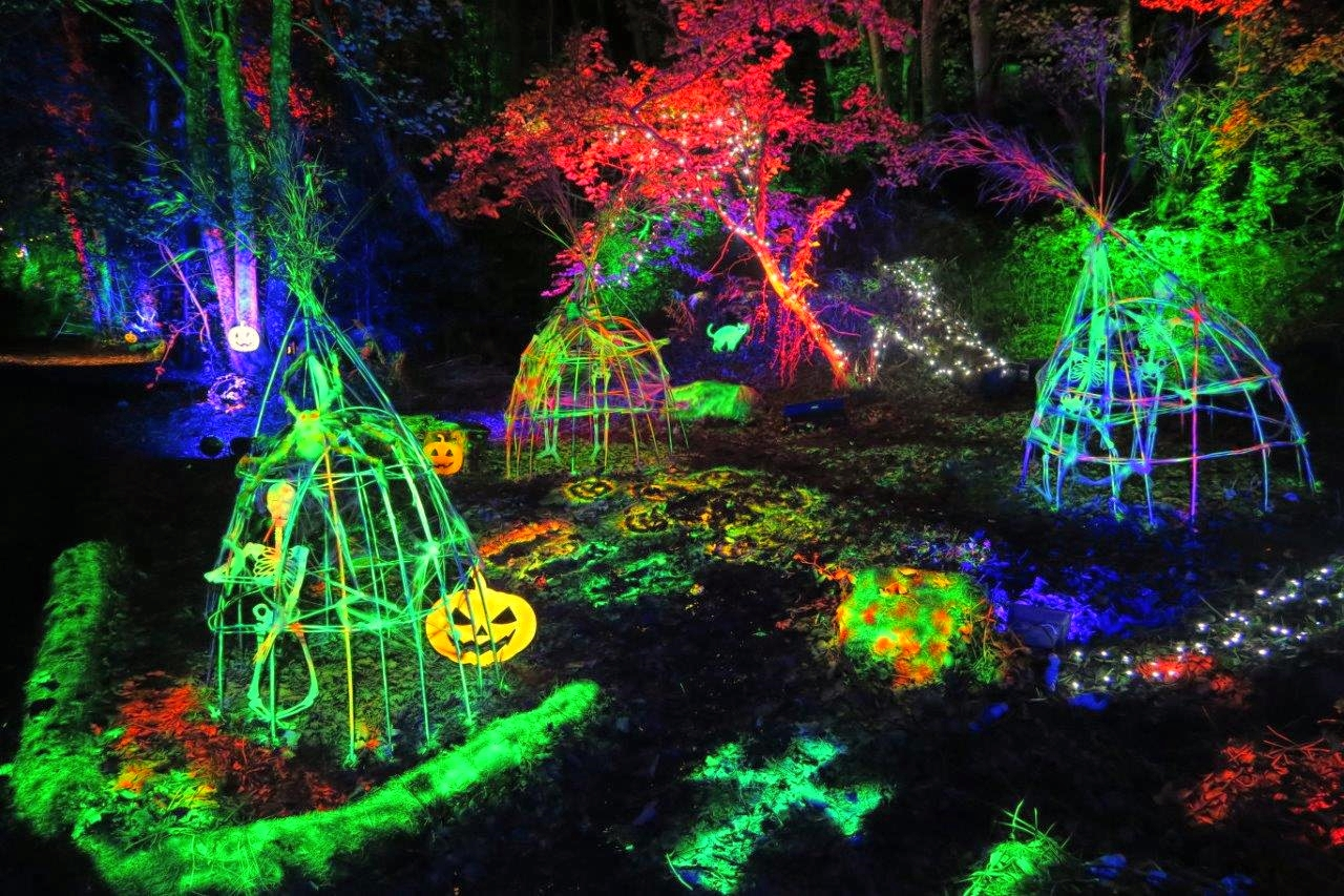 Halloween lighting event in an enchanted forest in North Wales, with giant UV reactive skeletons and pumpkins. Uplit trees, illuminated in green red and blue by waterproof LED lighting