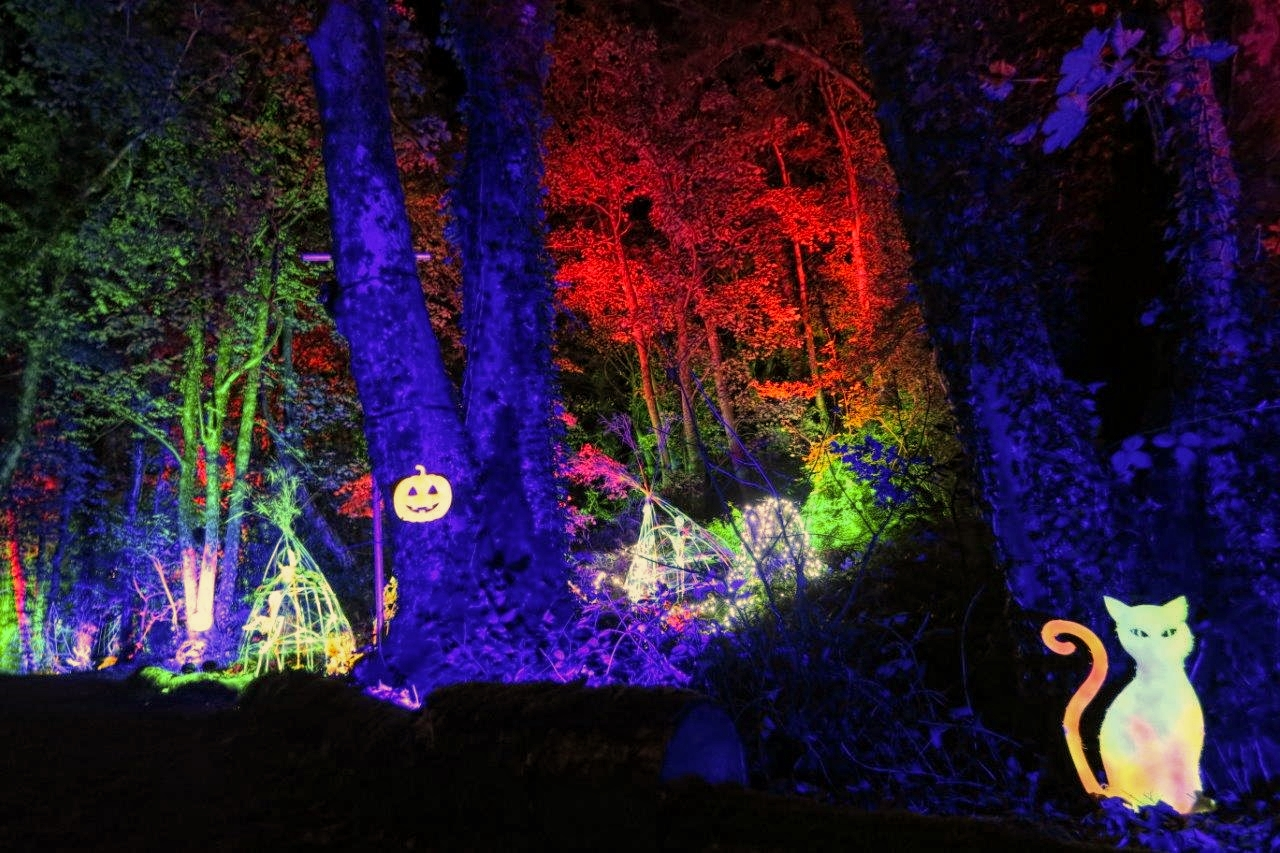 Halloween outdoor lighting event, in an enchanted illuminated forest in North Wales. With LED tree lighting, UV reactive fluorescent cat and pumpkin, plus coloured up-lighting, illuminating the trees in blue, green and red.
