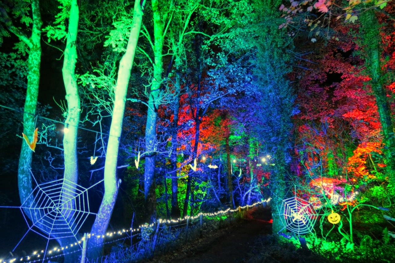 Halloween outdoor lighting event, in an enchanted illuminated forest in North Wales. With glowing spider webs and illuminated trees, lit in green and blue by weatherproof LED up-lighting.